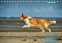 Collies? Was sonst! (Tischkalender 2019 DIN A5 quer) - Produktdetailbild 8