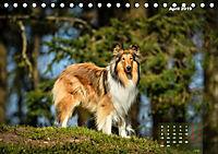 Collies? Was sonst! (Tischkalender 2019 DIN A5 quer) - Produktdetailbild 4