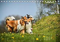 Collies? Was sonst! (Tischkalender 2019 DIN A5 quer) - Produktdetailbild 2