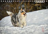 Collies? Was sonst! (Tischkalender 2019 DIN A5 quer) - Produktdetailbild 1
