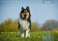 Collies? Was sonst! (Tischkalender 2019 DIN A5 quer) - Produktdetailbild 5