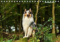 Collies? Was sonst! (Tischkalender 2019 DIN A5 quer) - Produktdetailbild 11