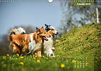 Collies? Was sonst! (Wandkalender 2019 DIN A3 quer) - Produktdetailbild 2