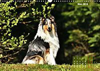 Collies? Was sonst! (Wandkalender 2019 DIN A3 quer) - Produktdetailbild 3