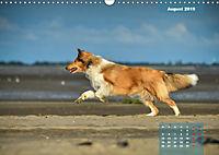 Collies? Was sonst! (Wandkalender 2019 DIN A3 quer) - Produktdetailbild 8