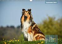 Collies? Was sonst! (Wandkalender 2019 DIN A3 quer) - Produktdetailbild 9