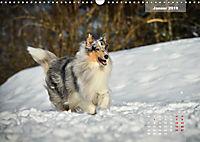 Collies? Was sonst! (Wandkalender 2019 DIN A3 quer) - Produktdetailbild 1