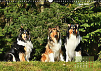 Collies? Was sonst! (Wandkalender 2019 DIN A3 quer) - Produktdetailbild 6