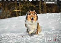 Collies? Was sonst! (Wandkalender 2019 DIN A3 quer) - Produktdetailbild 12