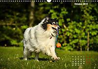 Collies? Was sonst! (Wandkalender 2019 DIN A3 quer) - Produktdetailbild 10