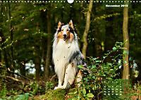 Collies? Was sonst! (Wandkalender 2019 DIN A3 quer) - Produktdetailbild 11
