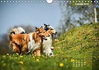 Collies? Was sonst! (Wandkalender 2019 DIN A4 quer) - Produktdetailbild 2