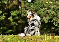 Collies? Was sonst! (Wandkalender 2019 DIN A4 quer) - Produktdetailbild 7