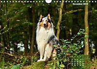 Collies? Was sonst! (Wandkalender 2019 DIN A4 quer) - Produktdetailbild 11