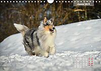 Collies? Was sonst! (Wandkalender 2019 DIN A4 quer) - Produktdetailbild 1