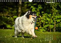 Collies? Was sonst! (Wandkalender 2019 DIN A4 quer) - Produktdetailbild 10