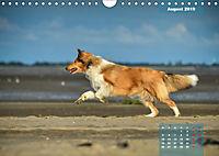 Collies? Was sonst! (Wandkalender 2019 DIN A4 quer) - Produktdetailbild 8