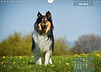 Collies? Was sonst! (Wandkalender 2019 DIN A4 quer) - Produktdetailbild 5