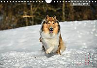 Collies? Was sonst! (Wandkalender 2019 DIN A4 quer) - Produktdetailbild 12