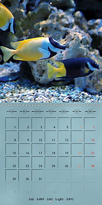 Colorful Reef Inhabitants - Fishes, Anemones and more (Wall Calendar 2019 300 × 300 mm Square) - Produktdetailbild 7