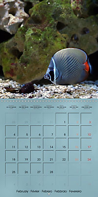 Colorful Reef Inhabitants - Fishes, Anemones and more (Wall Calendar 2019 300 × 300 mm Square) - Produktdetailbild 2