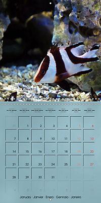 Colorful Reef Inhabitants - Fishes, Anemones and more (Wall Calendar 2019 300 × 300 mm Square) - Produktdetailbild 1