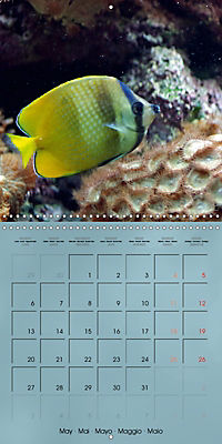 Colorful Reef Inhabitants - Fishes, Anemones and more (Wall Calendar 2019 300 × 300 mm Square) - Produktdetailbild 5
