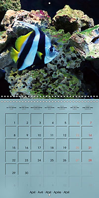 Colorful Reef Inhabitants - Fishes, Anemones and more (Wall Calendar 2019 300 × 300 mm Square) - Produktdetailbild 4