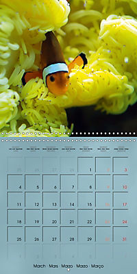 Colorful Reef Inhabitants - Fishes, Anemones and more (Wall Calendar 2019 300 × 300 mm Square) - Produktdetailbild 3