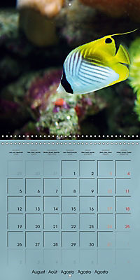 Colorful Reef Inhabitants - Fishes, Anemones and more (Wall Calendar 2019 300 × 300 mm Square) - Produktdetailbild 8
