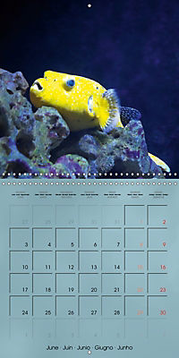 Colorful Reef Inhabitants - Fishes, Anemones and more (Wall Calendar 2019 300 × 300 mm Square) - Produktdetailbild 6