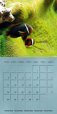 Colorful Reef Inhabitants - Fishes, Anemones and more (Wall Calendar 2019 300 × 300 mm Square) - Produktdetailbild 11
