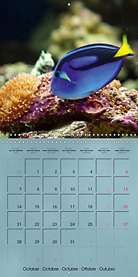 Colorful Reef Inhabitants - Fishes, Anemones and more (Wall Calendar 2019 300 × 300 mm Square) - Produktdetailbild 10