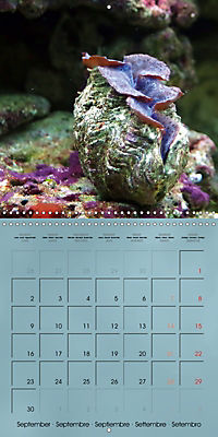 Colorful Reef Inhabitants - Fishes, Anemones and more (Wall Calendar 2019 300 × 300 mm Square) - Produktdetailbild 9