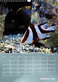 Colorful Reef Inhabitants (Wall Calendar 2019 DIN A3 Portrait) - Produktdetailbild 1