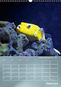 Colorful Reef Inhabitants (Wall Calendar 2019 DIN A3 Portrait) - Produktdetailbild 6