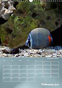 Colorful Reef Inhabitants (Wall Calendar 2019 DIN A3 Portrait) - Produktdetailbild 2