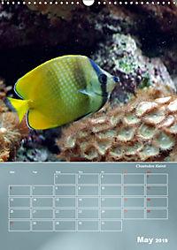 Colorful Reef Inhabitants (Wall Calendar 2019 DIN A3 Portrait) - Produktdetailbild 5