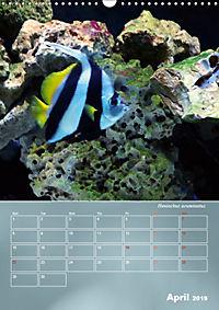 Colorful Reef Inhabitants (Wall Calendar 2019 DIN A3 Portrait) - Produktdetailbild 4