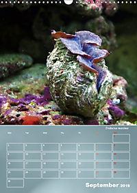 Colorful Reef Inhabitants (Wall Calendar 2019 DIN A3 Portrait) - Produktdetailbild 9