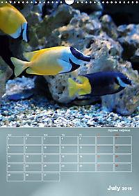 Colorful Reef Inhabitants (Wall Calendar 2019 DIN A3 Portrait) - Produktdetailbild 7