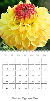 Colors of Dahlias (Wall Calendar 2019 300 × 300 mm Square) - Produktdetailbild 3