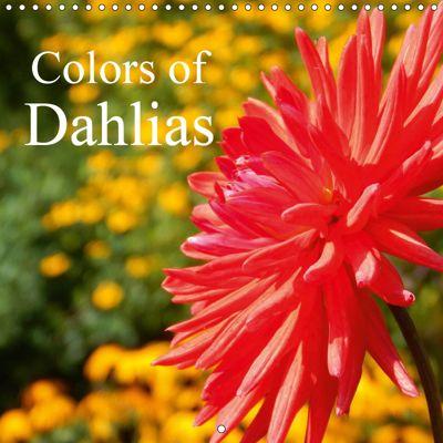 Colors of Dahlias (Wall Calendar 2019 300 × 300 mm Square), Martina Busch
