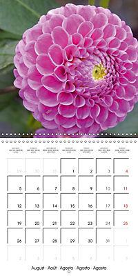 Colors of Dahlias (Wall Calendar 2019 300 × 300 mm Square) - Produktdetailbild 8