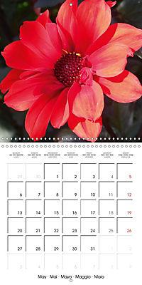 Colors of Dahlias (Wall Calendar 2019 300 × 300 mm Square) - Produktdetailbild 5