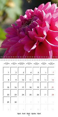 Colors of Dahlias (Wall Calendar 2019 300 × 300 mm Square) - Produktdetailbild 4
