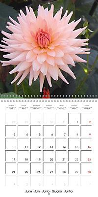 Colors of Dahlias (Wall Calendar 2019 300 × 300 mm Square) - Produktdetailbild 6