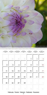 Colors of Dahlias (Wall Calendar 2019 300 × 300 mm Square) - Produktdetailbild 2