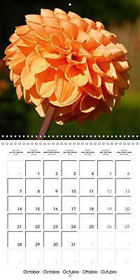 Colors of Dahlias (Wall Calendar 2019 300 × 300 mm Square) - Produktdetailbild 10