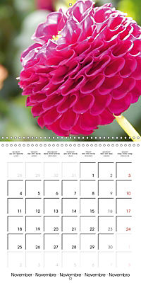 Colors of Dahlias (Wall Calendar 2019 300 × 300 mm Square) - Produktdetailbild 11